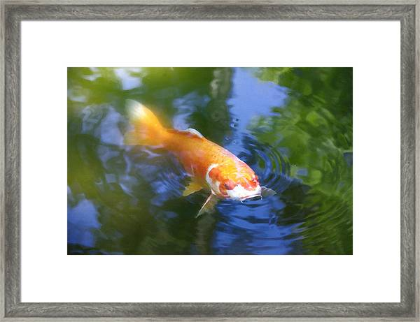 Skimming The Surface Framed Print