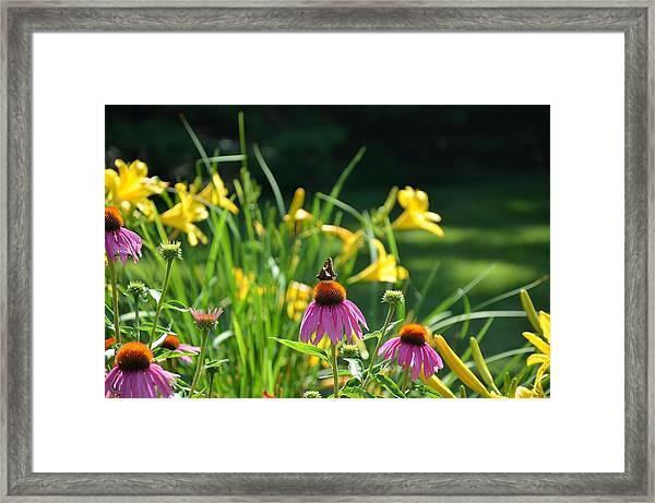 Skipper In The Flowers Framed Print
