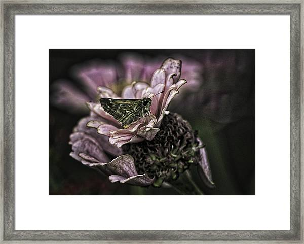 Skipper On Flower Framed Print