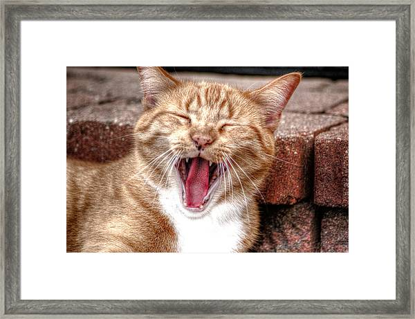 Skippy Laughing Framed Print