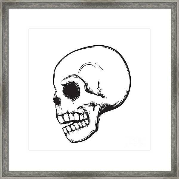 Skull, Side View, Isolated On White Framed Print by Nexusby