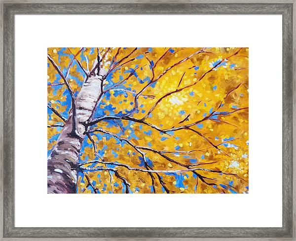Sky Birch Framed Print