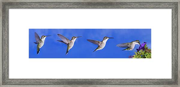 Sky Blue Flyers Collage Framed Print