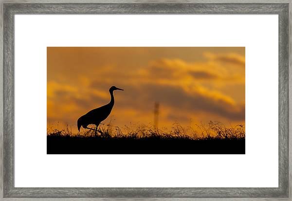 Sky Gold Framed Print