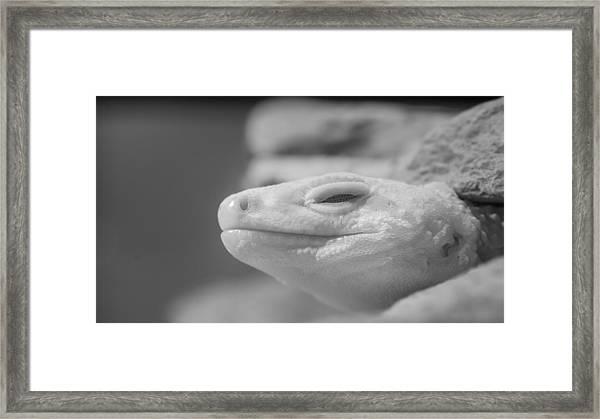 Sleeping Rock Framed Print