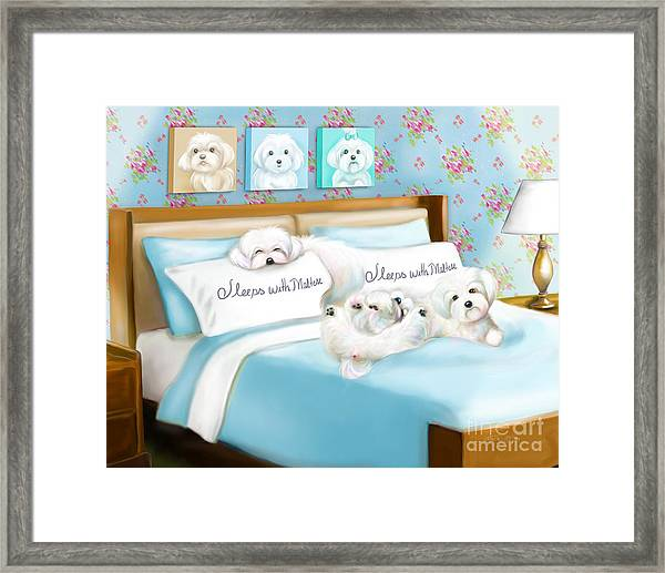 Sleeps With Maltese Framed Print