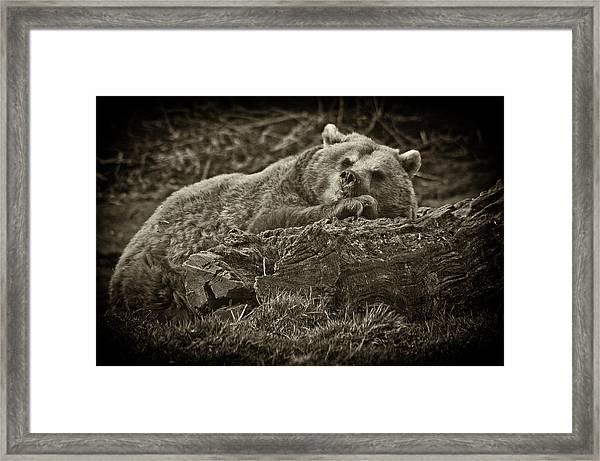 Sleepy Bear Framed Print