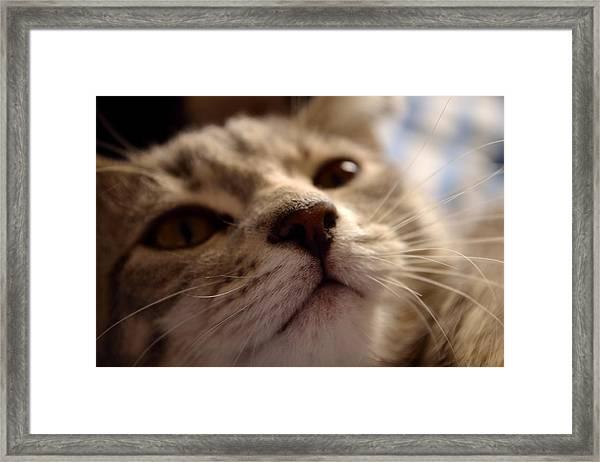 Sleepy Kitten Framed Print