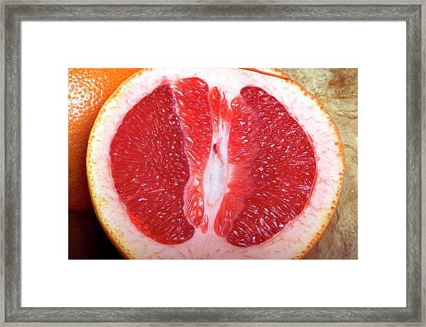 Sliced Pink Grapefruit Framed Print