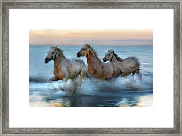 Slow Motion Horses Framed Print by Xavier Ortega