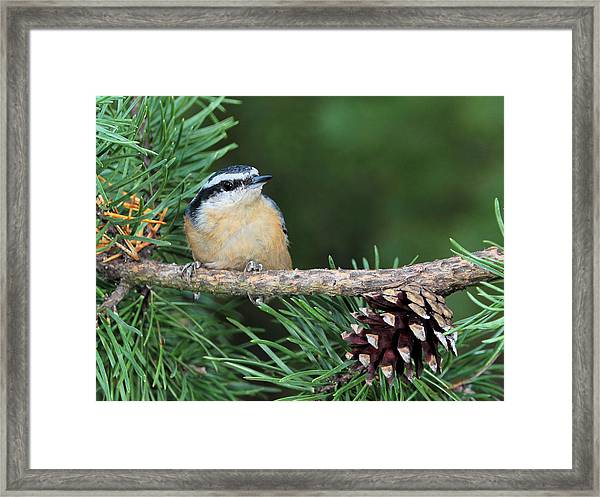 Small And Cute Framed Print