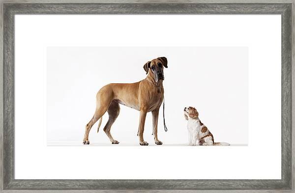 Small Dog Looking At Bigger Dog Framed Print by Martin Barraud