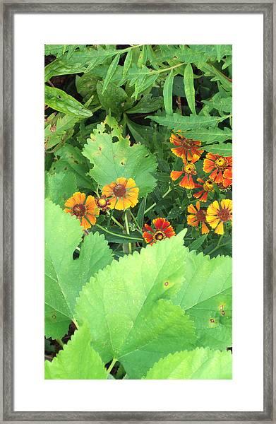 Small Flowers Framed Print by Cynthia Harvey