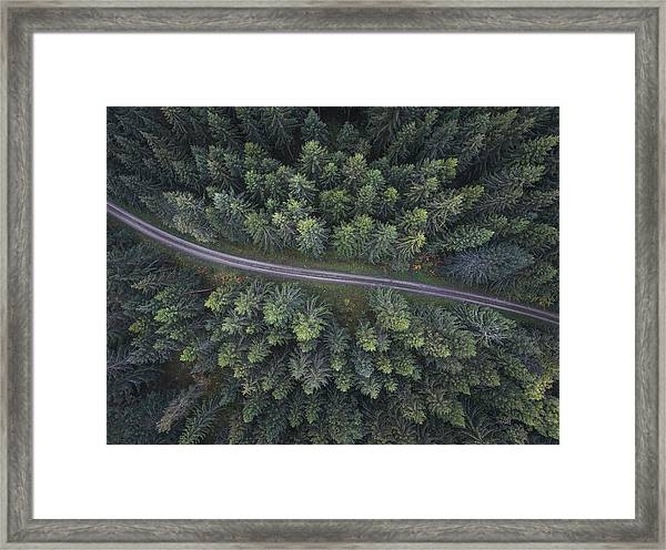Small Road Through The Forest Framed Print
