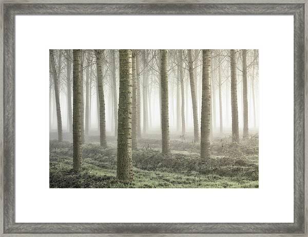 Small Woodland Framed Print