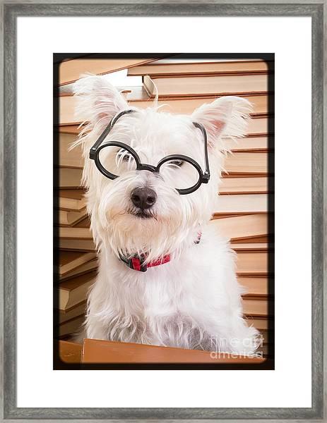 Smart Doggie Framed Print