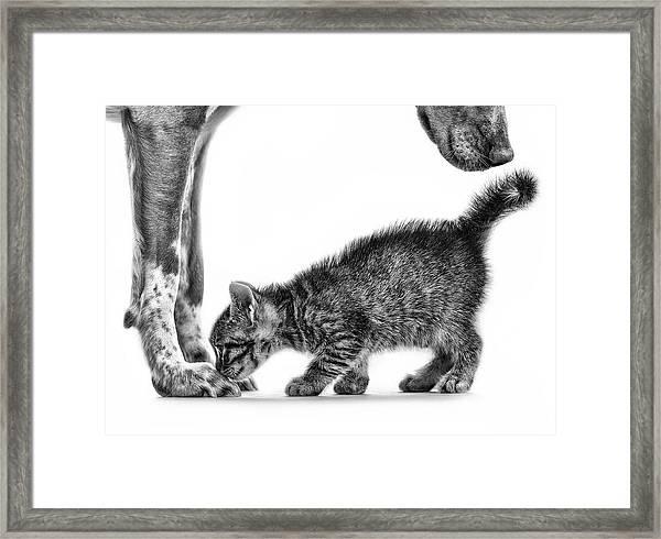 Smell Me Framed Print by Monte Pi (10catsplus)
