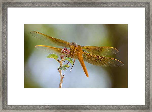 Smile And Be Happy  Framed Print