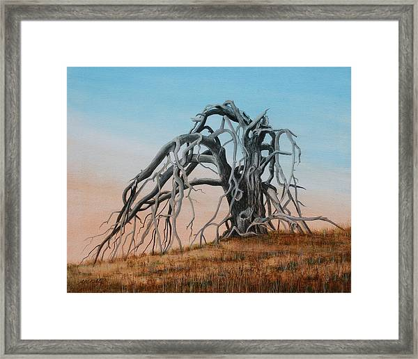 Smiley Canyon Tree Framed Print by J W Kelly