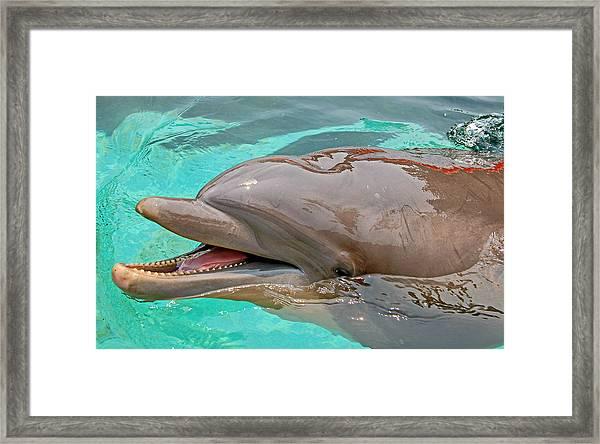 Smiling At You Framed Print