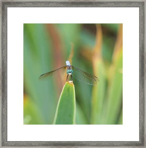 Smiling Dragonfly Framed Print