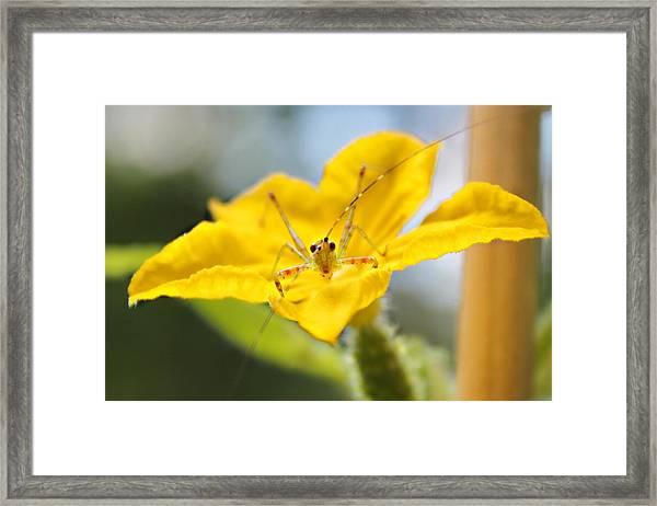 Smiling Katydid Framed Print