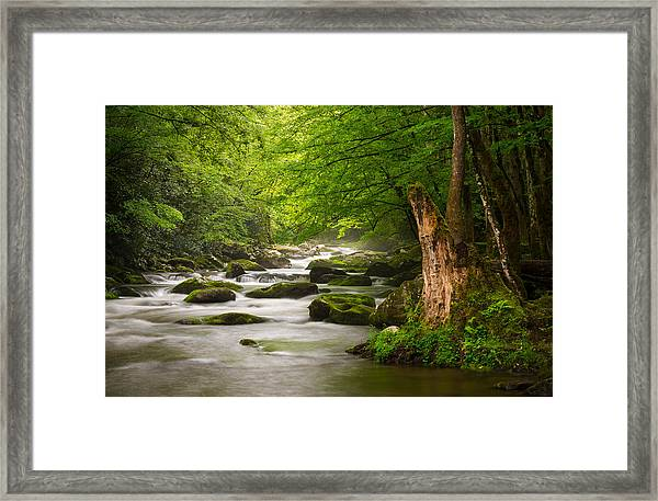 Smoky Mountains Solitude - Great Smoky Mountains National Park Framed Print