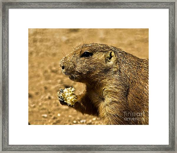 Snack Time Framed Print