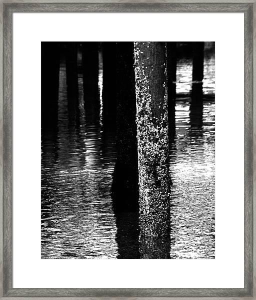 Snails In Black And White Framed Print