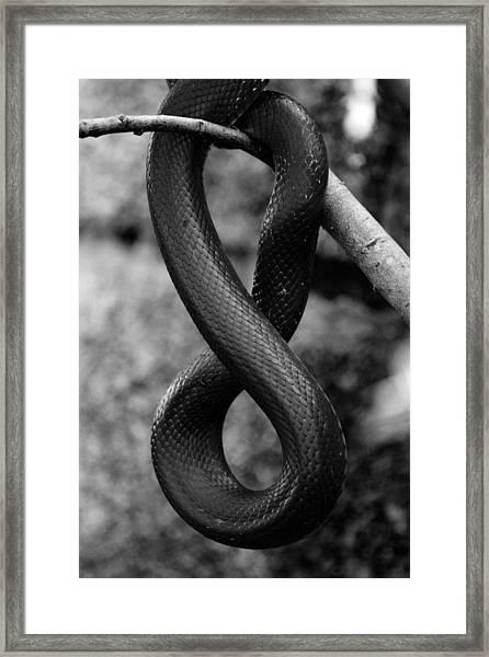 Snake Springs Eternal Framed Print