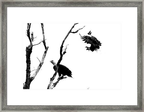 Sneak Up Framed Print