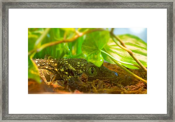 Sneaking And Looking Framed Print