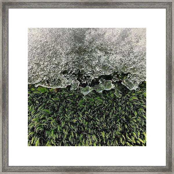 Snow & Moss, 2015.02.07 #bmr #lehman Framed Print