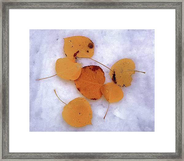 Snow Aspens Framed Print
