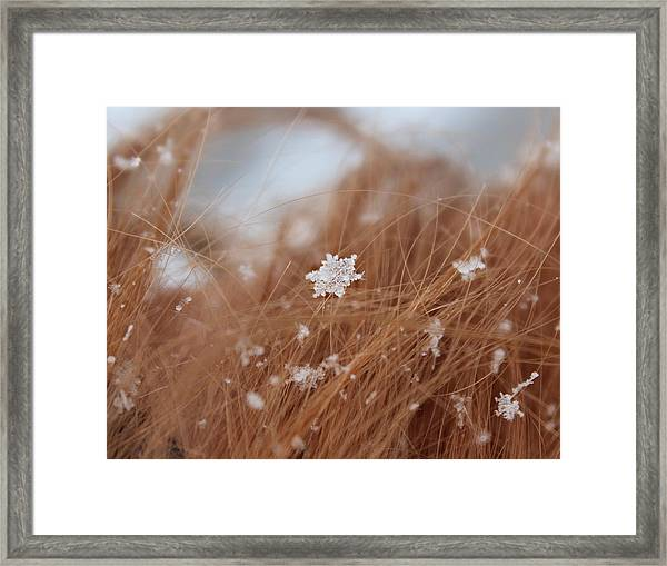 Framed Print featuring the photograph Snow Beauty by Candice Trimble