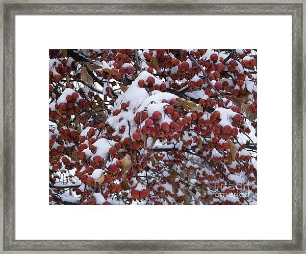 Snow Covered Berries Framed Print