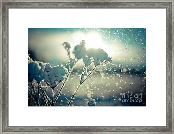 Framed Print featuring the photograph Snow Covered Branch Against Defocused Background.  by Raimond Klavins