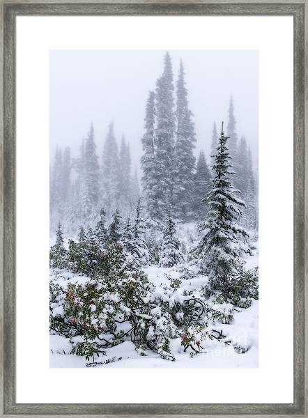 Snow Covered Mountain Ash Framed Print