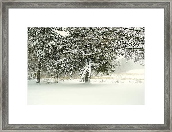 Snow-covered Trees Framed Print