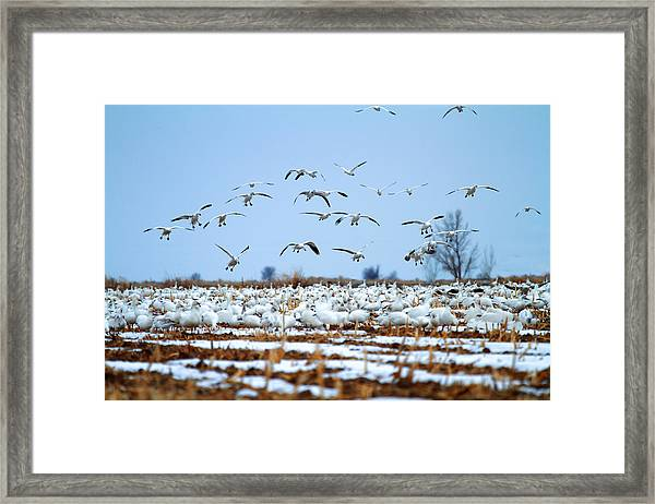 Snow Fall Framed Print