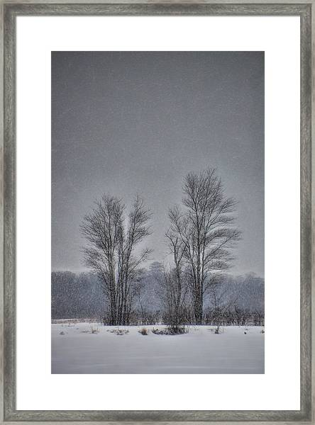 Framed Print featuring the photograph Snow Falling On Bare Trees by Beth Sawickie