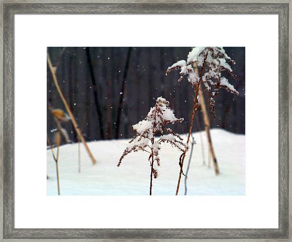 Snow Fluffed Framed Print