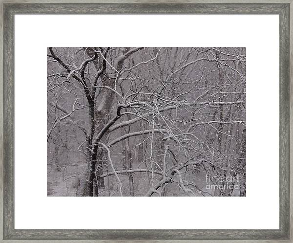 Snow In The Trees At Bulls Island Framed Print