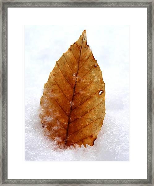 Snow Leaf Framed Print