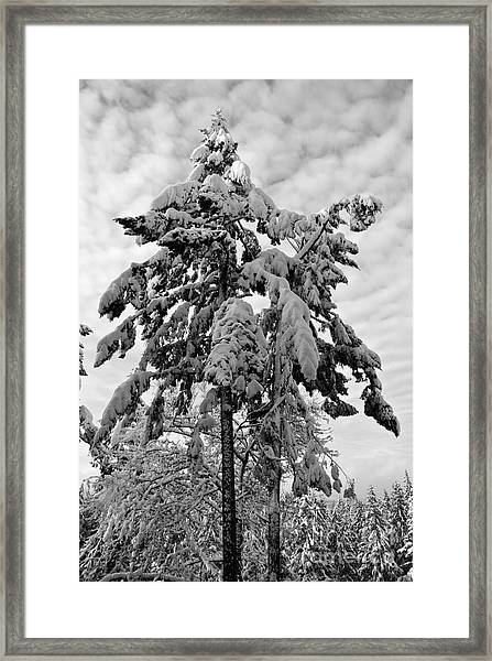 Snow Pillows Framed Print