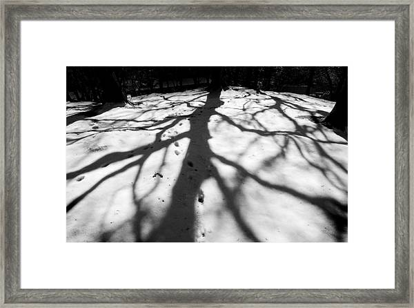 Snow Shadows Framed Print