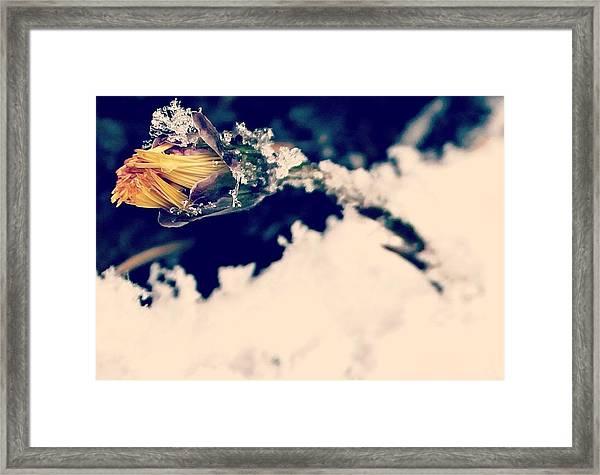 Snow Wildflower Framed Print
