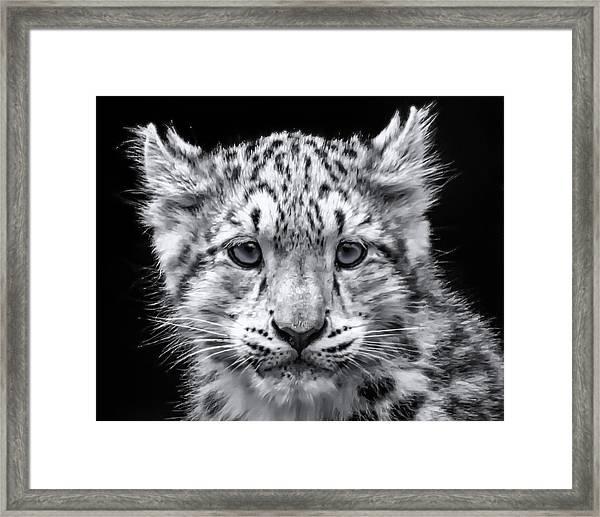 Snowcub Framed Print