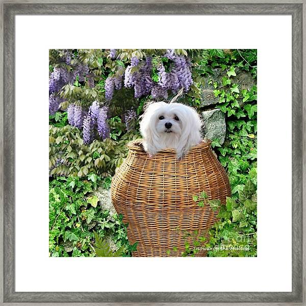 Snowdrop In A Basket Framed Print