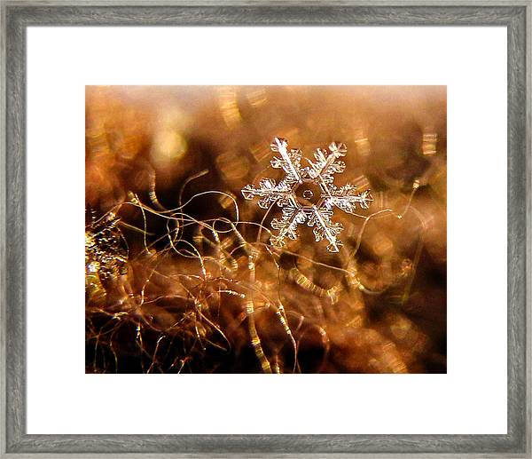 Snowflake On Brown Framed Print